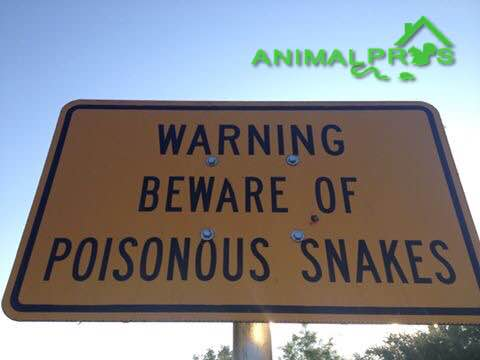 snake-sign