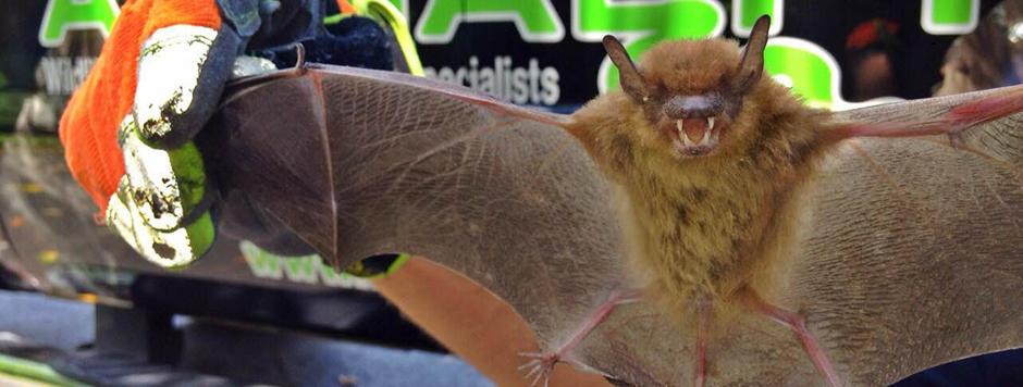 bat-slider