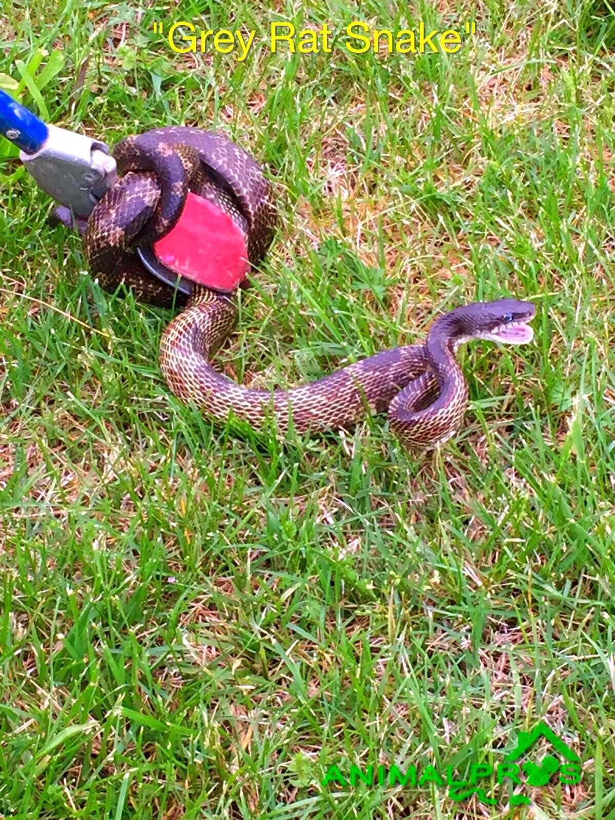 Snake Identification Gainesville