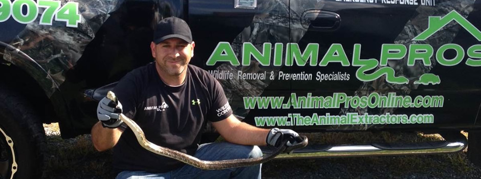 Greenville Snake Control, removal, Trapping of Snakes