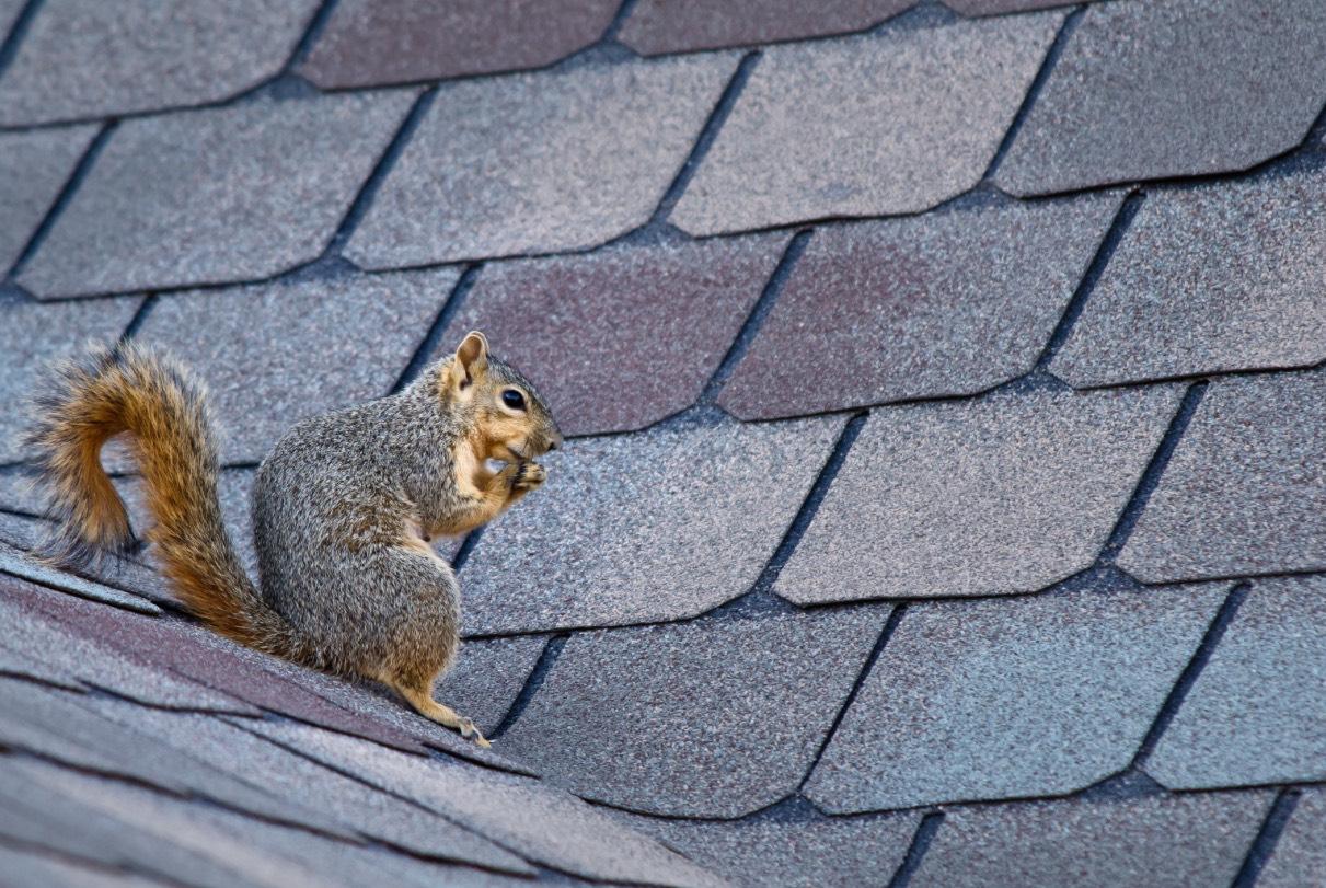 Animals in the attic
