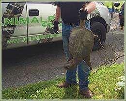Animal removal, wildlife control