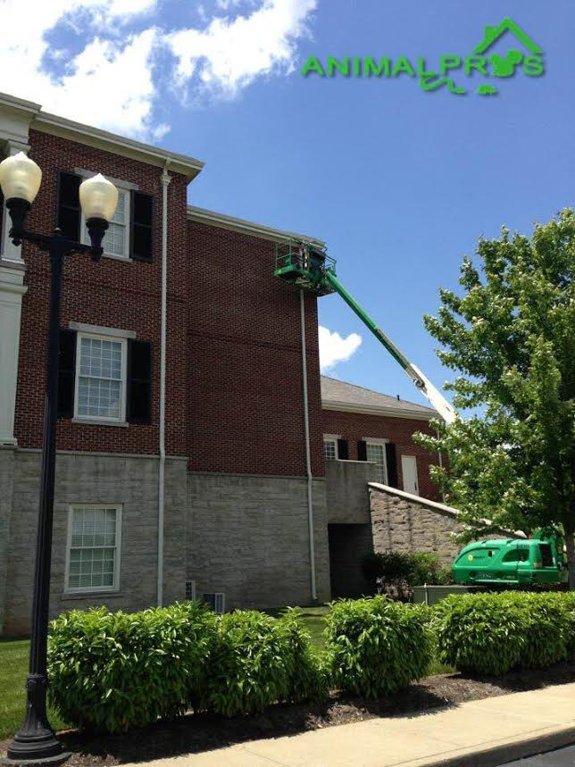 commercial removal