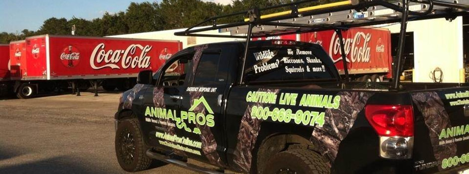 commercial-animal-removal