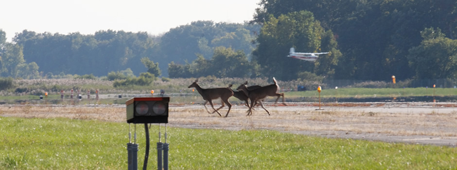 deer-control