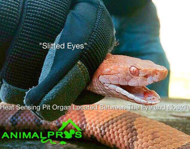 snake control Nashville