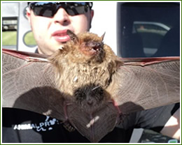 how to clean up bat droppings