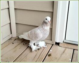 Nashville Bird Removal Amp Control Services Animal Pros