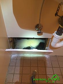 nashville skunk spray smell removal in home. Black Bedroom Furniture Sets. Home Design Ideas