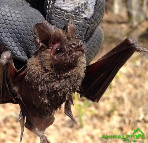 Bat Appears Sick Or Rabid Nashville Animal Pros