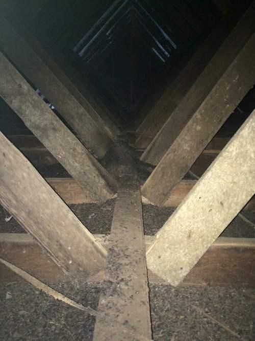 Odor From Bat Droppings in Nashville