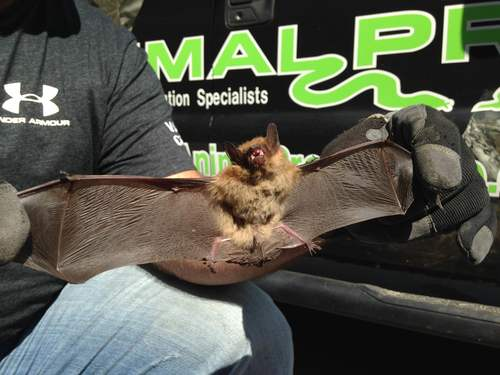 Bats In The Basement in Nashville