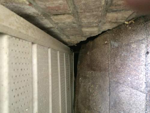 Tampa Rodent Proofing Eave Gaps Animal Pros