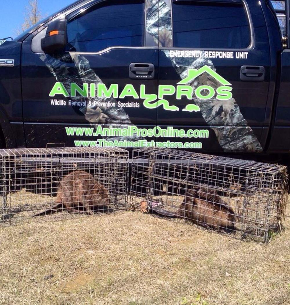 Lexington Pest Wildlife Removal