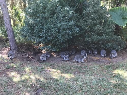 Charleston Animal Control