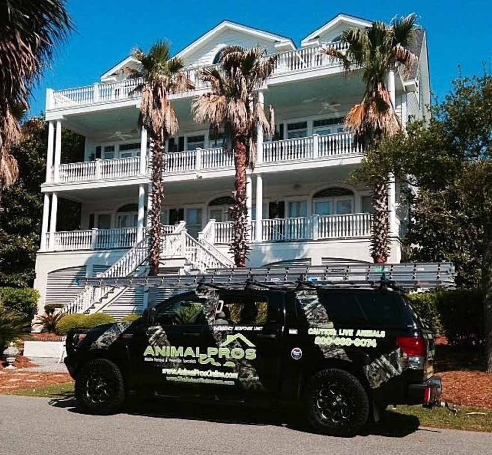 Charleston Wildlife Removal and Excursion